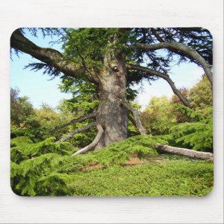 Mousepad Esteira de Moue da árvore de Cedro--Líbano
