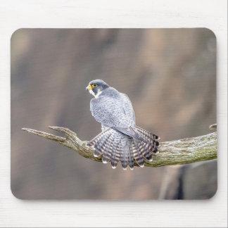 Mousepad Falcão de peregrino no parque de um estado a outro