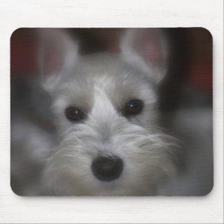 Mousepad Filhote de cachorro branco do Schnauzer da cara