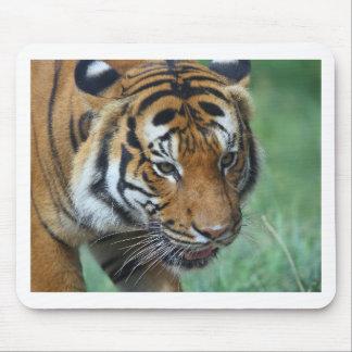 Mousepad Fim-acima do tigre do Malay dos alugueres