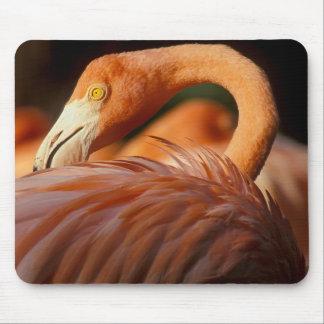 Mousepad Flamingo