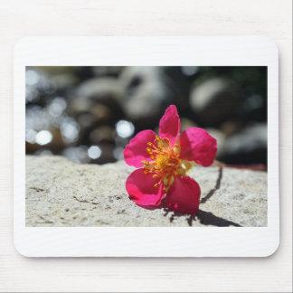 Mousepad Flor cor-de-rosa do mistério