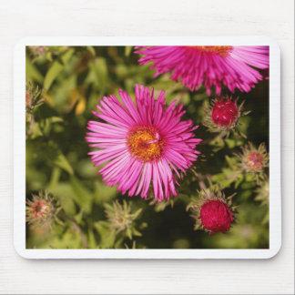 Mousepad Flor de um áster de Nova Inglaterra