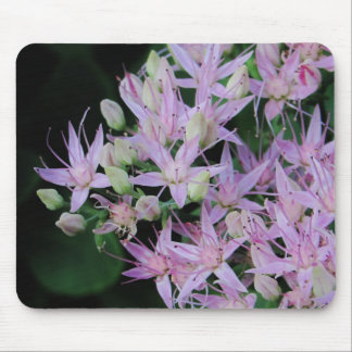 Mousepad Flor roxa do Stonecrop