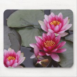 Mousepad Flores bonitas do lago na almofada do mause