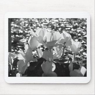 Mousepad Flores brancas do cyclamen de Backlits no fundo