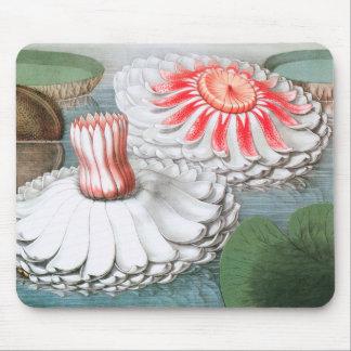 Mousepad Flores de Waterlilies do vintage em uma lagoa do