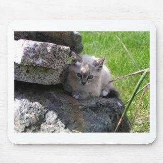 Mousepad Foco doce do gatinho