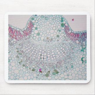 Mousepad Folha do algodão sob o microscópio