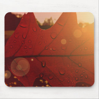 Mousepad Folha do outono