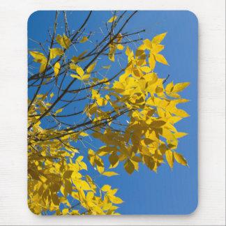 Mousepad Folhas do amarelo na árvore v2 da queda