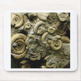 Mousepad fósseis encaixados dos caracóis