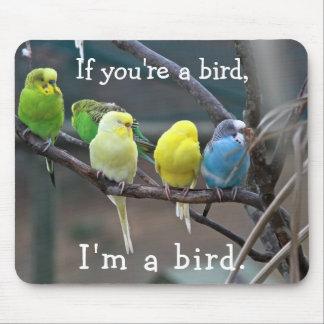 Mousepad Foto de Budgies dos Parakeets das citações do amor