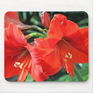 Mousepad Fotografia vermelha bonita da flor