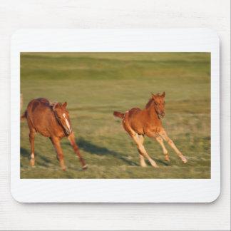 Mousepad Funcionamento dos cavalos selvagem