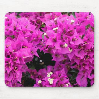 Mousepad Fundo fúcsia roxo do Bougainvillea