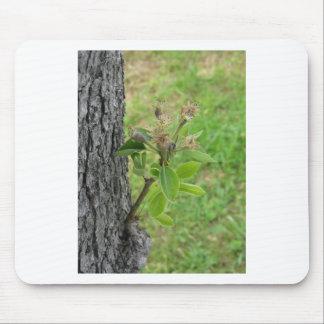 Mousepad Galho da árvore de pera com os botões no primavera