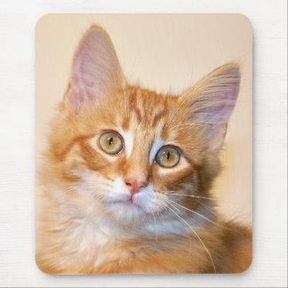 Mousepad Gatinho alaranjado do gato malhado