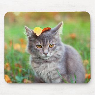 Mousepad Gatinho cinzento bonito com a folha na cabeça