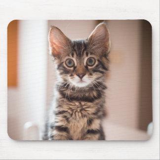 Mousepad Gatinho do gato malhado na mesa