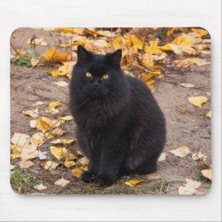 Mousepad Gatinho e folhas de outono pretos macios