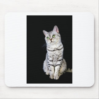 Mousepad Gato britânico adulto do cabelo curto no fundo