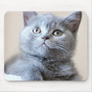 Mousepad Gato britânico cinzento de Shorthair