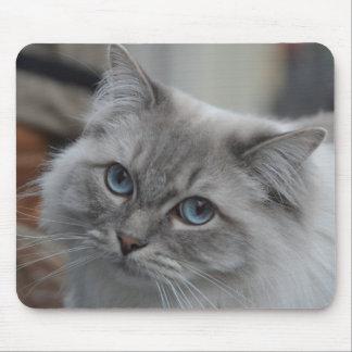 Mousepad Gato cinzento bonito com tapete do rato dos olhos