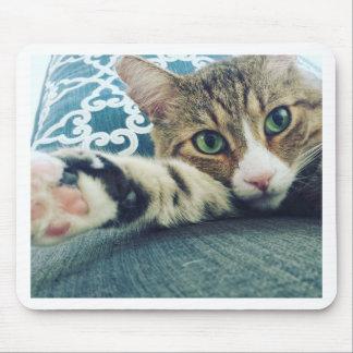 Mousepad Gato de gato malhado bonito com olhos verdes
