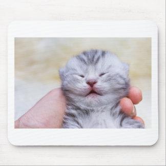 Mousepad Gato de gato malhado de prata recém-nascido
