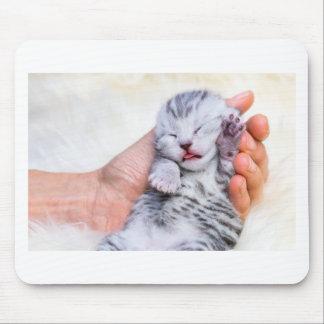 Mousepad Gato de gato malhado de prata recém-nascido do
