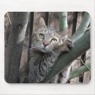 Mousepad Gato de gato malhado que escala uma árvore