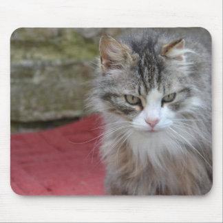 Mousepad Gato em Mauspad - fotografias