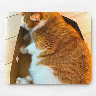 Mousepad Gato malhado do gengibre na caixa de cartão