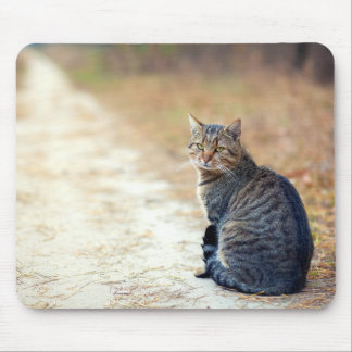 Mousepad Gato malhado do trajeto do outono