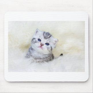 Mousepad Gato novo velho de três semanas que senta-se na
