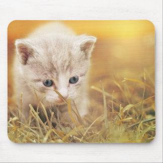 Mousepad Gato pequeno doce