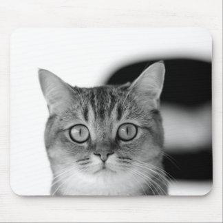 Mousepad Gato preto e branco que olha reto em você