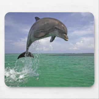 Mousepad Golfinho no salto selvagem