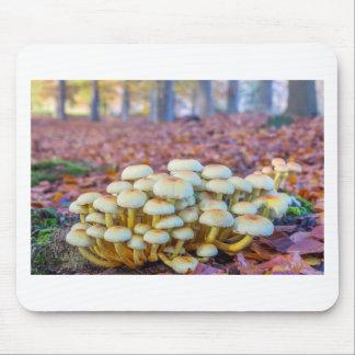 Mousepad Grupo de cogumelos na floresta da faia da queda