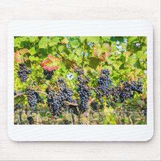 Mousepad Grupos azuis de suspensão da uva no vinhedo