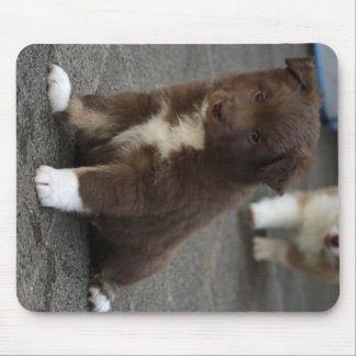 Mousepad IcelandicSheepdog_20171202_by_JAMFoto