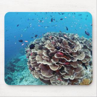Mousepad Ilha coral