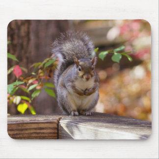 Mousepad Implorando o esquilo