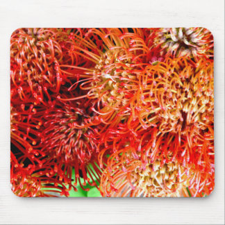 Mousepad ~ impressionante do Banksia do ~