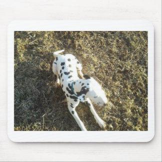 Mousepad Kevin o Dalmatian