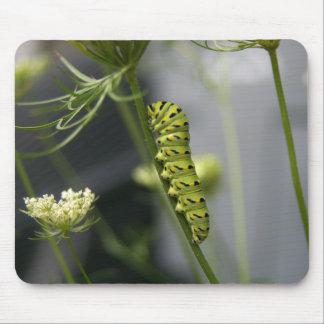 Mousepad Lagarta preta do swallowtail (parsleyworm) em Dil