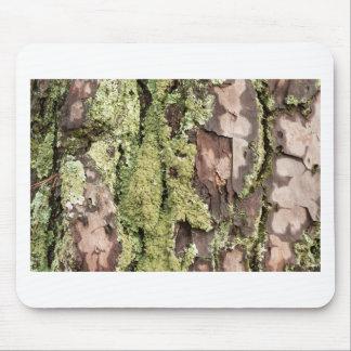 Mousepad Latido de pinheiro da costa leste molhado da chuva