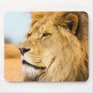 Mousepad Leão grande que olha longe