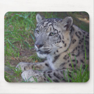 Mousepad Leopardo de neve